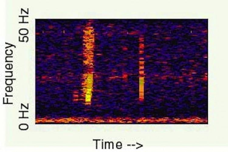 Spectrogram of Bloop.